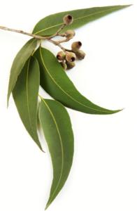 Kneipp eukaliptusz fürdősó